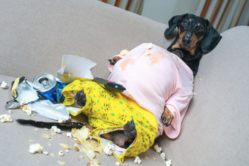 fat dog couch potato eating a popcorn, chocolate, and watching television.