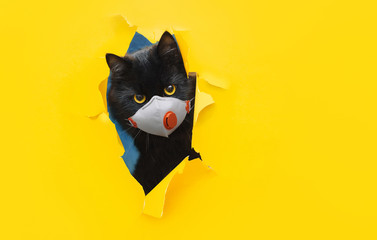 A funny bug-eyed black cat in a white protective medical mask respirator peeks out of a torn hole in yellow paper. The concept of quarantine, coronavirus, COVID-19. Copy space. Fotobehang
