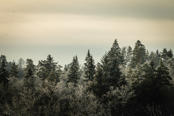 Keuken foto achterwand Beige Beautiful winter forest landscape view with pines. Vintage and retro style. Mystery forest