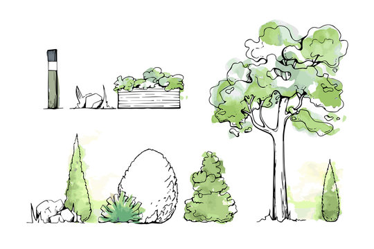 Set of summer Trees and Bushes. Tree watercolor sketches for landscape design. Vector illustration, hand drawn, isolated on white background. Also a lamp, a garden-bed, stones, grass.