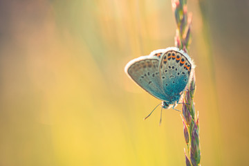Sunset nature meadow field with butterfly as spring summer background concept. Beautiful summer meadow background. Amazing inspire nature closeup.