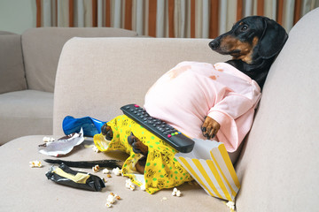 fat dog couch potato eating a popcorn, fast food and watching television