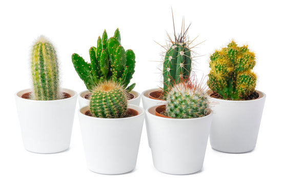 different types of cactus isolated on white background, close up