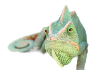 Fotobehang Kameleon Closeup of green Chameleon head