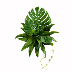 Green leaves of tropical plants bush (Monstera,fern,leaves) floral arrangement indoors garden nature backdrop isolated on white background thailand,clipping path included.