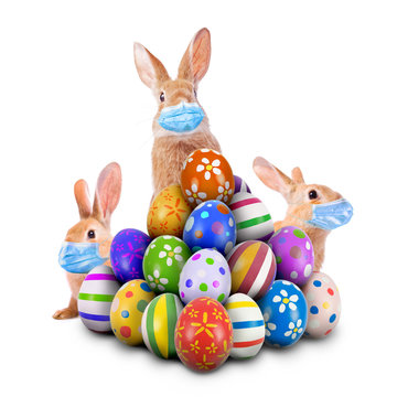 Easter Bunnies or Easter Rabbits scared of Coronavirus or Covid-19 pandemic with surgical face masks hiding and peeking behind a pile of painted Easter Eggs for Easter Egg Hunt Game