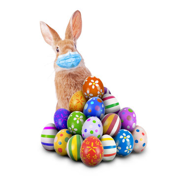 Easter Bunny or Easter Rabbit scared of Coronavirus or Covid-19 pandemic with surgical mask hiding and peeking behind a pile of painted Easter Eggs isolated white background aka cut out or cutout