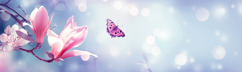 Photo sur Aluminium Magnolia Spring blooming pink magnolia flowers and fluttering butterfly on fantasy mysterious background with bokeh, fabulous fairy tale artistic floral banner with copy space
