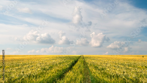 Fototapete Scenic view of grain field and bright blue sky with cumulus and cirrus. Rural summer landscape. Beauty nature, agriculture and seasonal harvest time.