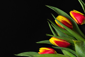 spring tulip flowers on black background. easter 2020 concept. top view with copy space