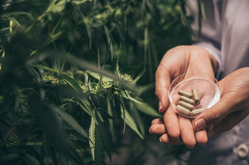Herbal capsules from cannabis weed