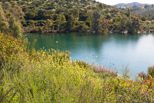 Spring wildflowers at Lake Jennings in Lakeside, California, located in San Diego County.