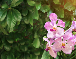 Fototapete - Beautiful tropical scene with orchid flowers
