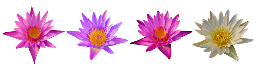 Garden Poster Lotus flower Set of Lotus flower isolated on white background. Have clipping path