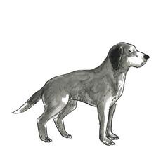 垂れ耳の犬ー全身