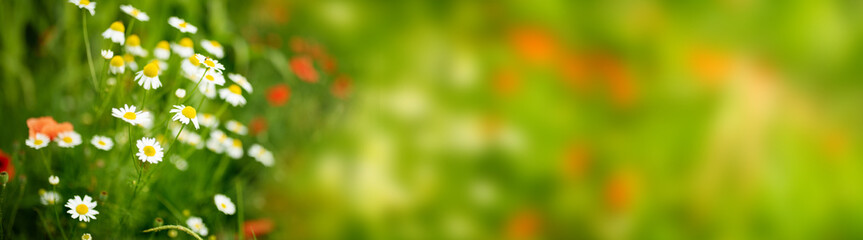 Fotoväggar - Flower meadow in spring_004