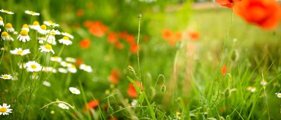 Fotoväggar - Flower meadow in spring