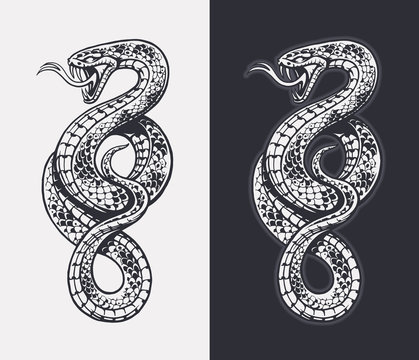 Snake Vector Isolated