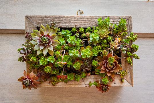 Succulent Art