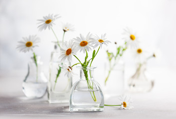 Beautiful daisy flowers in glass vases on light background. Floral composition in home interior.