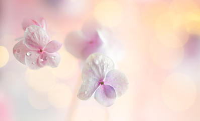Wall Murals Floral Spring or summer floral composition made of fresh hydrangea flowers on light pastel background. Festive flowers concept with copy space. Soft focus, macro photography.