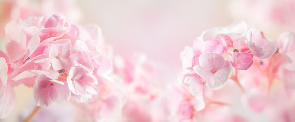 Spring or summer floral composition made of fresh hydrangea flowers on light pastel background. Festive flowers concept with copy space. Soft focus, macro photography.