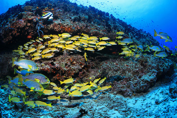 Fototapete - Beautiful tropical coral reef and shoal of colorful fish