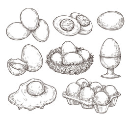Eggs sketch. Vintage natural egg, broken shell. Hand drawn farming food, animal products. Drawing ingredients, rustic vector illustration. Shell chicken egg, natural sketch yolk fried