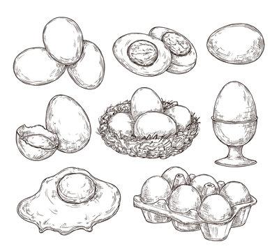 Eggs sketch. Vintage natural egg, broken shell. Hand drawn farming food, animal products. Drawing ingredients, rustic vector illustration. Shell chicken egg, natural sketch yolk fried