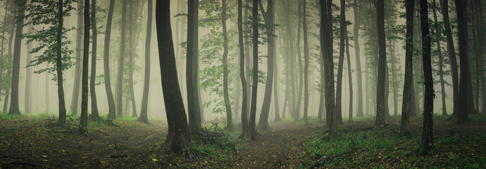 fog in green forest, forest panorama landscape Fototapete