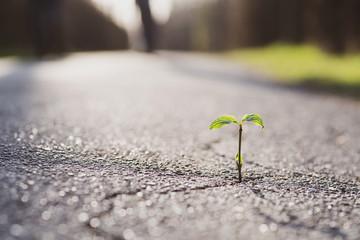 Fototapeta Eine kleine Pflanze wächst aus einem Riss in der Straße  obraz