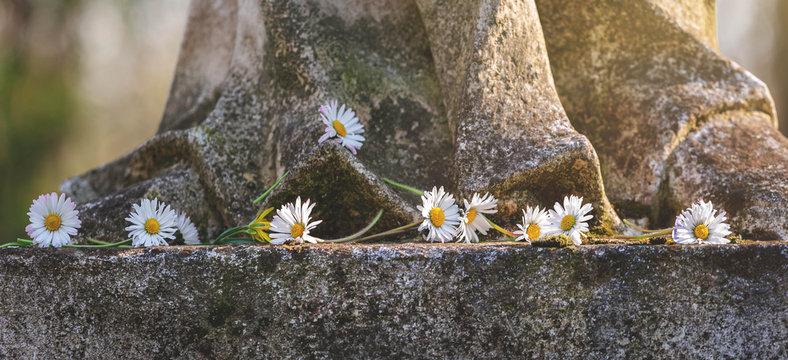 Gänseblümchen auf Stein zum Gedenken, Grußkarte, Frühling