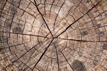 Tree stump background. Brown cracked and cut Wooden texture pattern background.