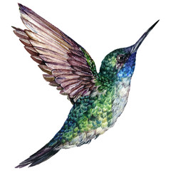 Watercolor Realistic Illustration of Flying Hummingbird
