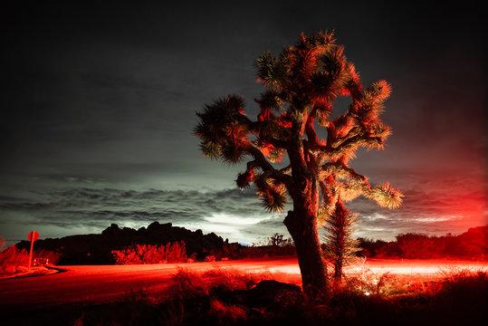 Joshua Tree lit up by car brake lights at night in Mojave desert