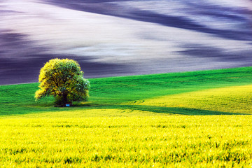 Autocollant pour porte Jaune Rural landscape with agricultural fields and tree on spring hills. South Moravia region, Czech Republic
