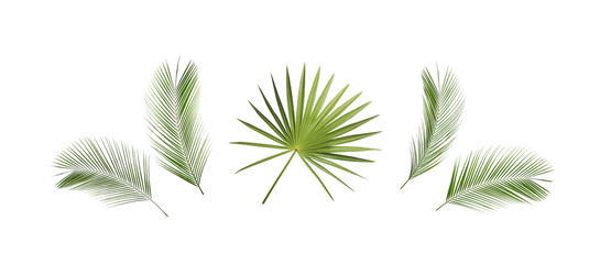 Set of tropical leaves on white background. Banner design Wall mural