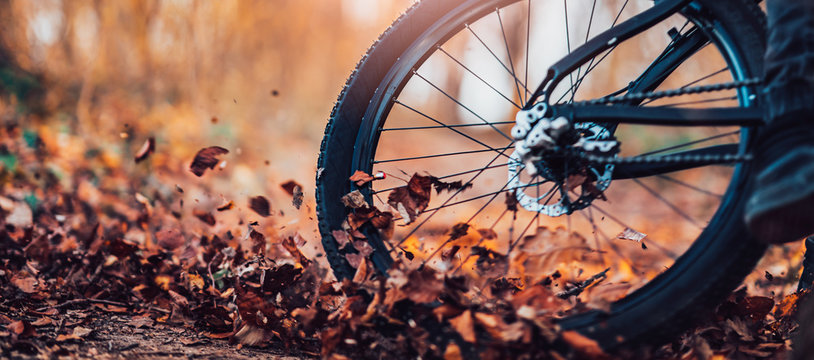 Close up, low angle view of mountain biker in the woods.