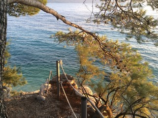Morze plaża drzewo Chorwacja wakacje