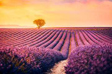 Photo sur Toile Lavande Wonderful scenery, amazing summer landscape of blooming lavender flowers, peaceful sunset view, agriculture scenic. Beautiful nature background, inspirational concept