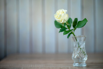 Cream rose in a crystal vase on a blurry background. In soft focus.