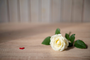 Cream rose lies on the table on a blurry background with red hearts. In soft focus. .