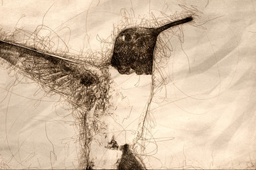 Wall Mural - Sketch of Black-Chinned Hummingbird Searching for Nectar in the Flower Garden