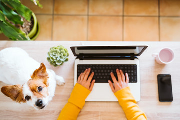young woman working on laptop at home,cute small dog besides. work from home, stay safe during coronavirus covid-2019 concpt