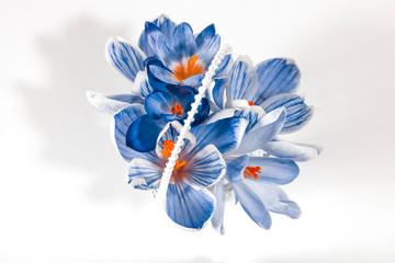 Keuken foto achterwand Grafische Prints A bouquet of blue Crocus flowers on a white background