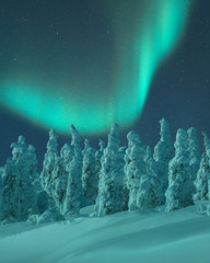 Aurora Borealis over snow covered trees