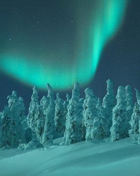 Aurora Borealis over snow covered trees