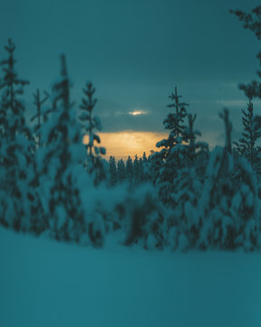 Snow covered trees in forest during sunset
