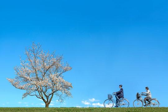 青空背景で満開の桜の木に向かい自転車に乗る高校生男女2人。進学,入学,進路,通学イメージ