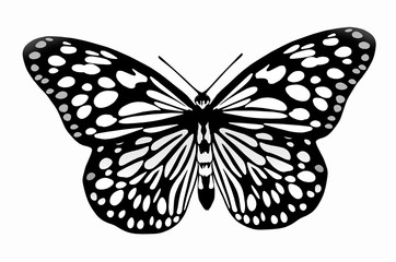 Black and white image of flying butterfly